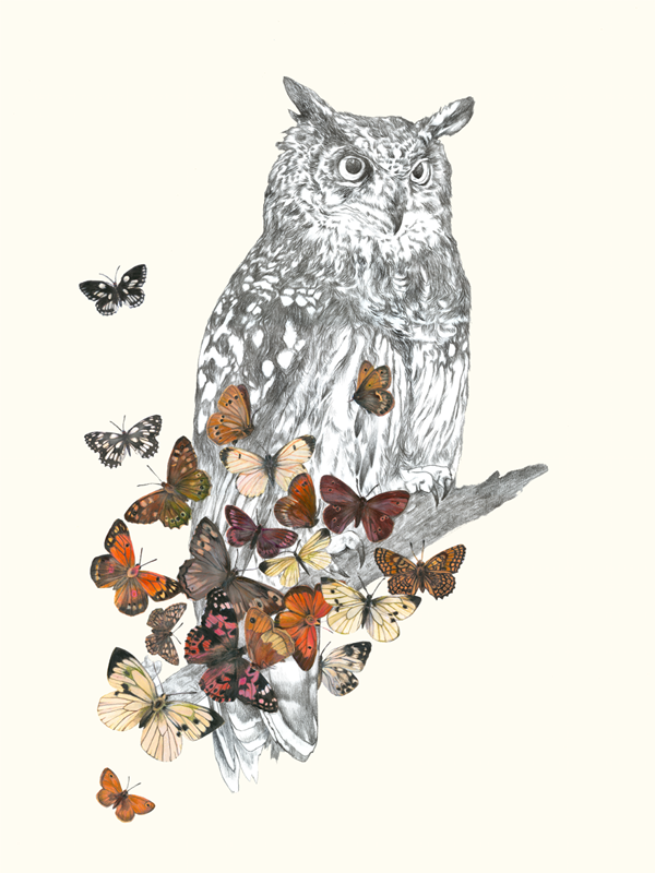 Owl and soul