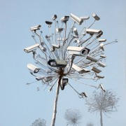 Untitled (Tree Cameras 2)