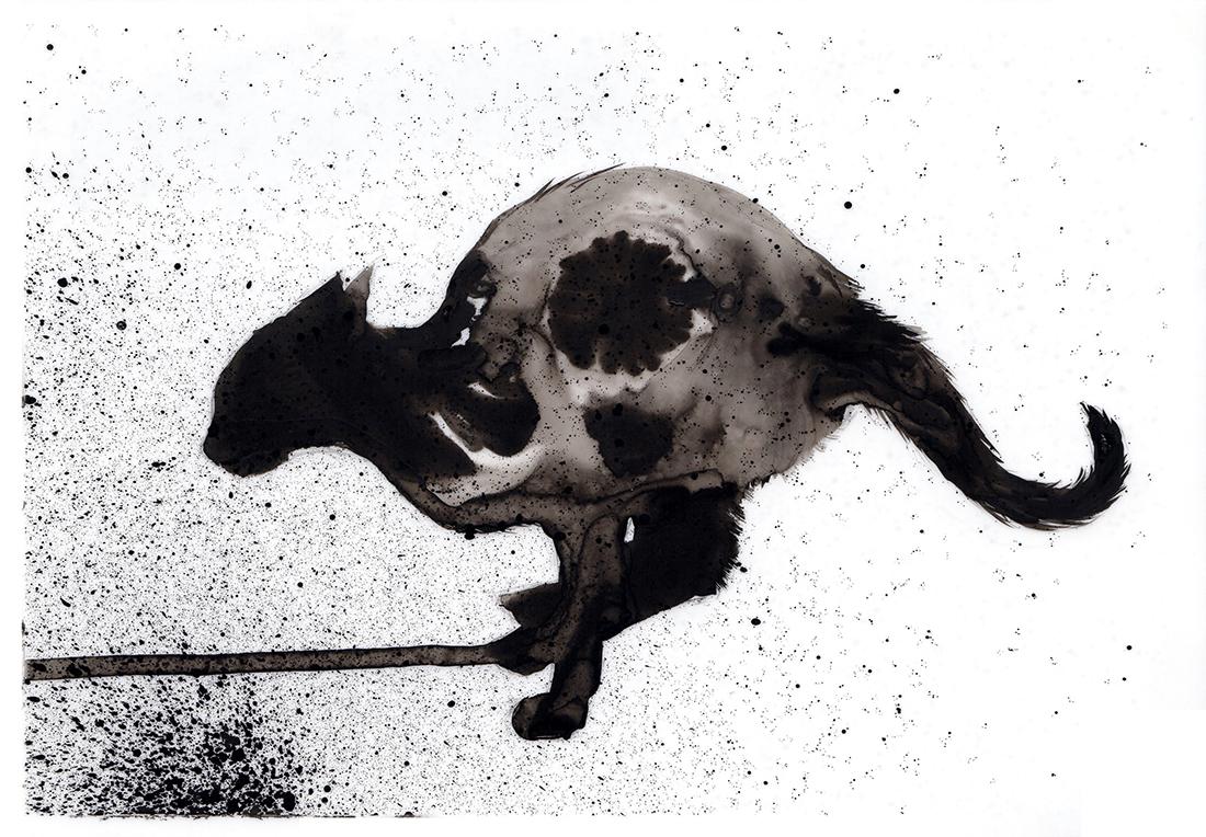 Cat Inkling #3