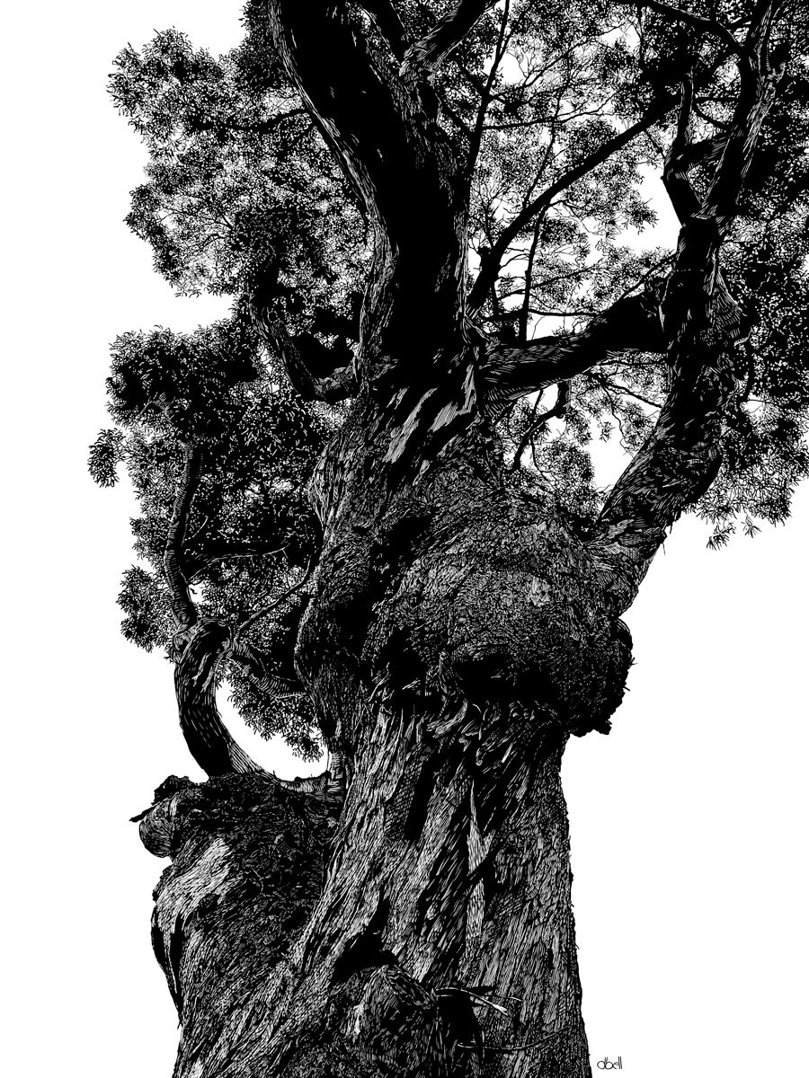 Big Sur Tree