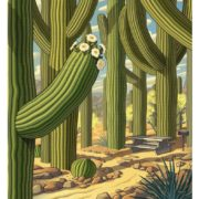 Explore Saguaro National Monument