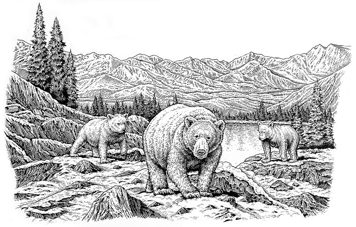 Kodiak mother, cubs